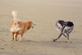 Mika und Mailo in Aktion