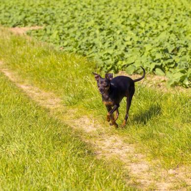 Mehr Felder zum Spazieren in Chemnitz wären toll, sagt Claudi. Aber auch so gibt es genüg schöne Gassigebiete! Foto: Vollverjackt