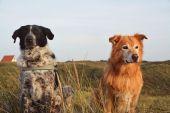 Mika und Mailo beim Vuurtoren