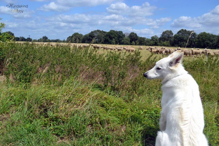 Abby genießt die ländlichen Seiten der Großstadt. Foto: Hundekind Abby