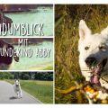 HundumBlick mit Hundekind Abby