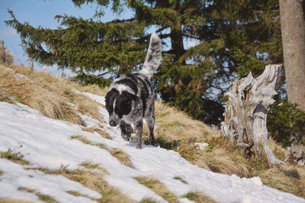 Mika beim Abstieg vom Zwiesel.