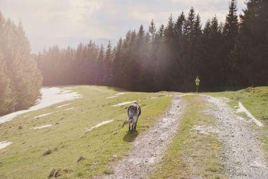 Auf einem einfach zu begehenden Weg machen wir uns an den Abstieg.
