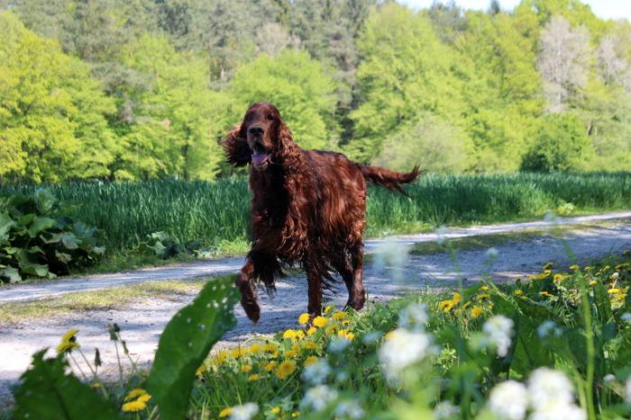 "Flynn, der ""Senior"" im Hundebloghaus. Foto: Hundebloghaus"