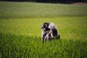 Die Hunde genießen die Pause und die Aussicht