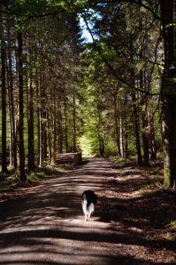 Angenehm schattig geht es durch den Wald wieder zurück zum Ausgangspunkt unseres Rundwegs
