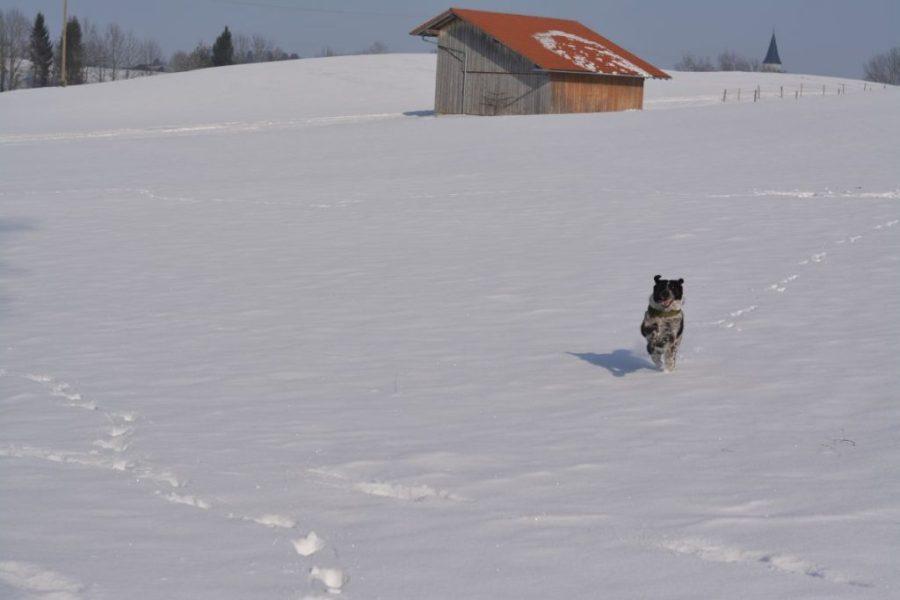 Traum-Wintertage wie diesen hier gibt es leider viel zu selten.