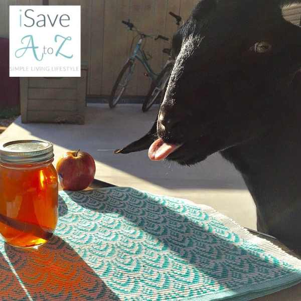 Apple Pie Moonshine Recipe iSaveA2Zcom