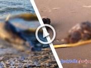 Spiaggiamento Delfino Tartaruga