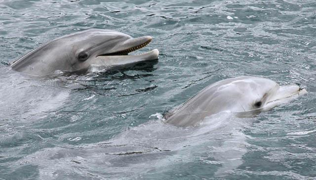 dolphin_flickr_Bas_Kers_(NL)_main