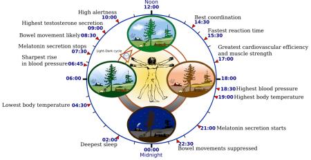 circadian clock vaXzine 5160061979_89e5f878d4_o
