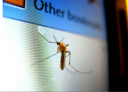 mosquito on screen
