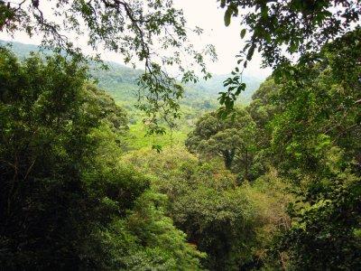 View through Borneo rainforest_Doug Wheller_2768374584_4179607402_o
