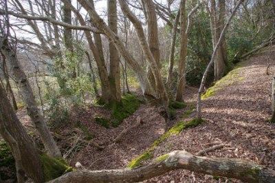 ancient woodland 16260312674_178980b0f7_z