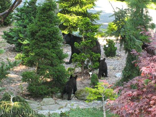 Bears in the garden