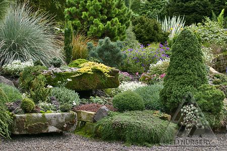 Hypertufa troughs in the garden