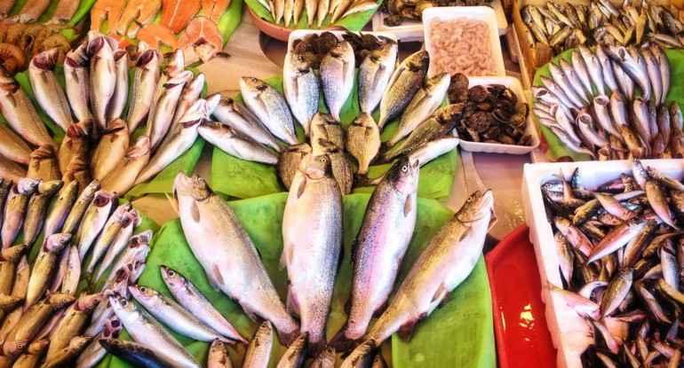 Bayat Balık Nasıl Anlaşılır ?