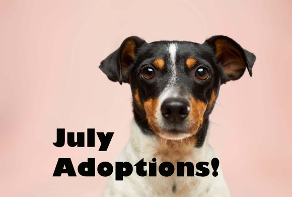 Adoptions – July