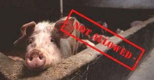 pork not allowed