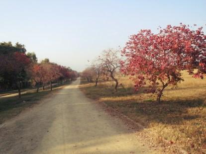 Fatima Jinnah Park in Islamabad