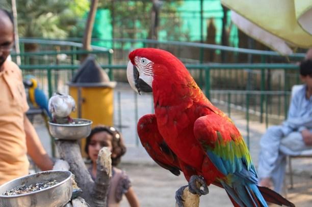 Birds at Lake View Park Islamabad