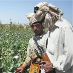 Photo of Eight Reasons the Taliban Are Winning