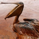 Photo of Oil Spill Feared to Have Long-Term Impact on Gulf