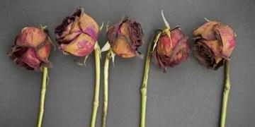 Foto: Mills Florist