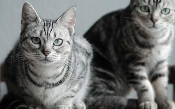 Foto: World's Best Cat Litter