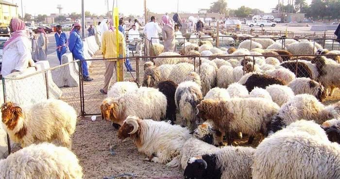 hewan ternak