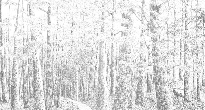 Foto: My Pen and Ink Drawings