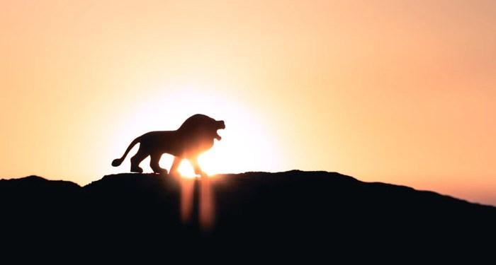 sahabat yang ditolong singa