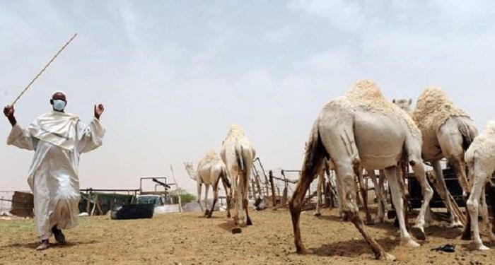 Ilustrasi. Foto: Al Balad