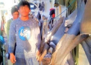 Para ABK asal Indonesia bekerja di kapal penangkap ikan yang memburu sirip hiu. Foto: BBC/KFEM