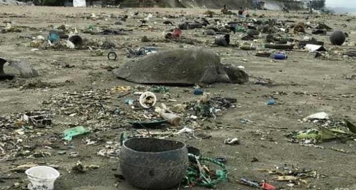160 Kura-Kura Terjerat Sampah Plastik di Bangladesh, Puluhan Mati. Foto: AFP/Suzauddin Rubel