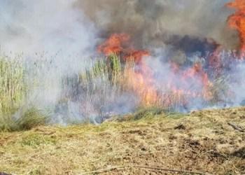 Kebakaran akibat balon api. Foto: PIC