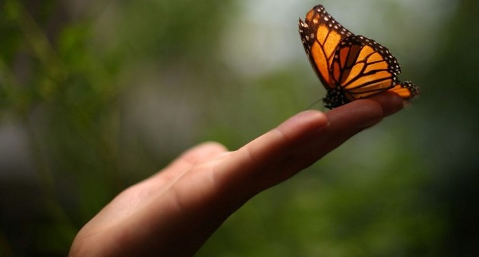 Ilustrasi kupu-kupu. Foto: Bloomberg