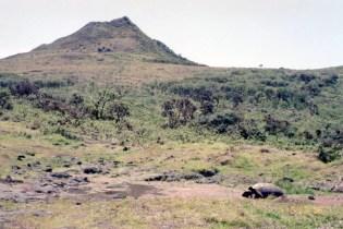 Santiago Island and Santiago Tortoise. Photo by Chad Hanson