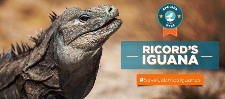 island-conservation-ricords-iguana-cabritos-island-blog-tommy-hall-bill-waldman