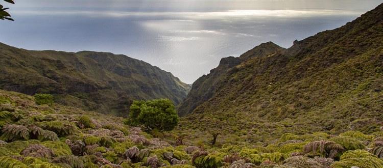 Island Conservation science chile alejandro selkirk landscape
