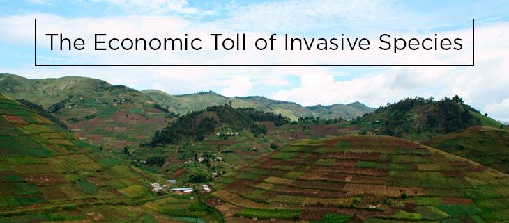 island conservation economic toll