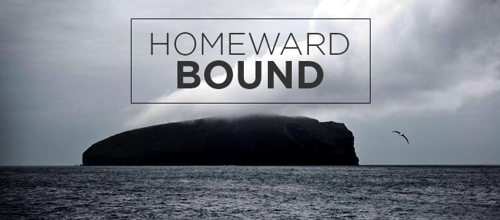 island conservation wwf new zealand antipodes island restoration eradication