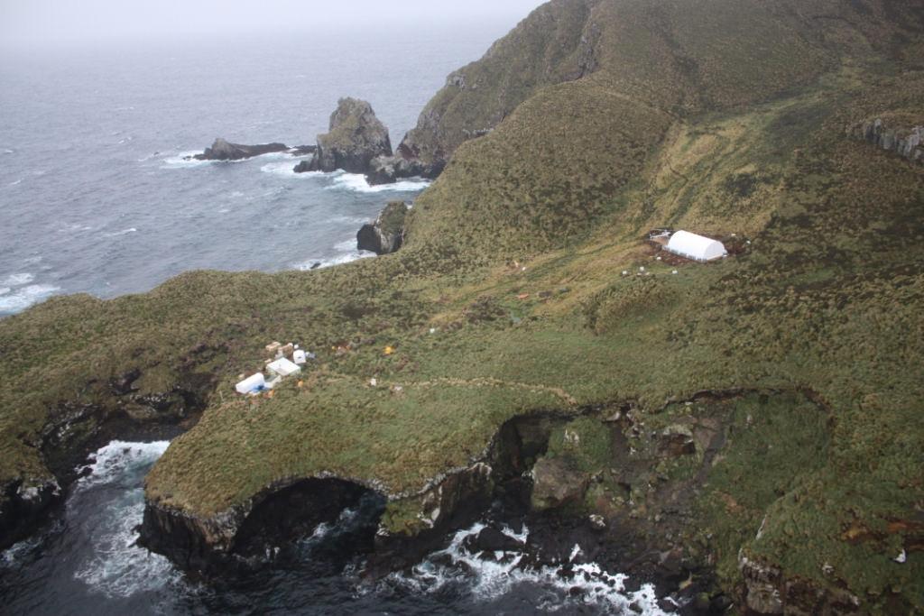 island conservation antipodes island new zealand