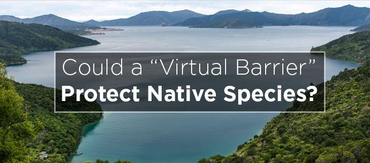 island conservation preventing extinctions virtual barrier bottle rock