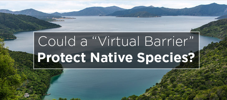 island conservation preventing extinctions virtual barrier bottle rock