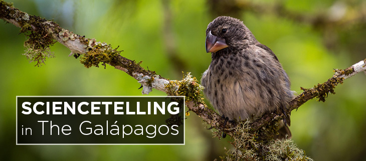 island-conservation-preventing-extinction-sciencetelling-national-geographic-galapagos-feat