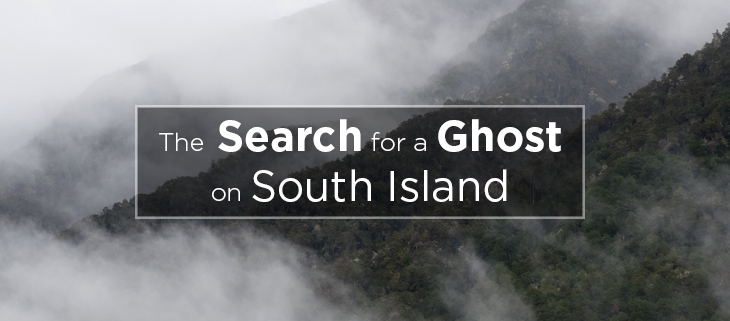 island-conservation-preventing-extinctions-grey-ghost-feat