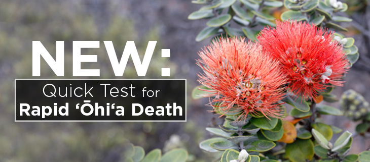 island-conservation-preventing-extinctions-rapid-ohia-death-science-feat