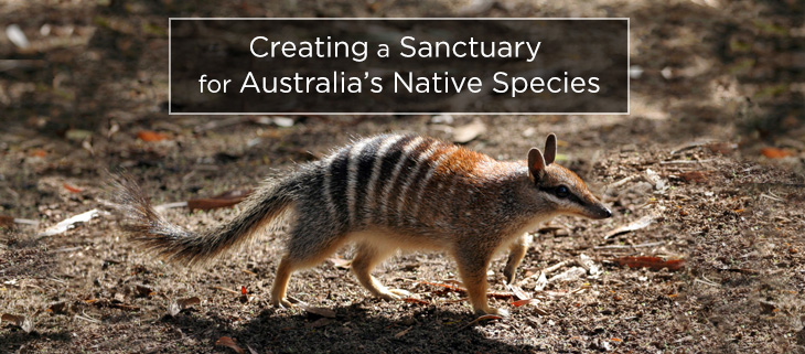 island-conservation-australian-island-sanctuary-feat