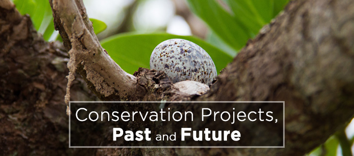 island-conservation-preventing-extinctions-richard-griffiths-past-future-conservation-feat